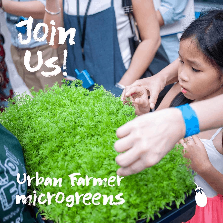 Citizen Farm is top 10 Urban Farms In Singapore For Locally-Grown Vegetables, Citizen Farm wedding, edible garden city