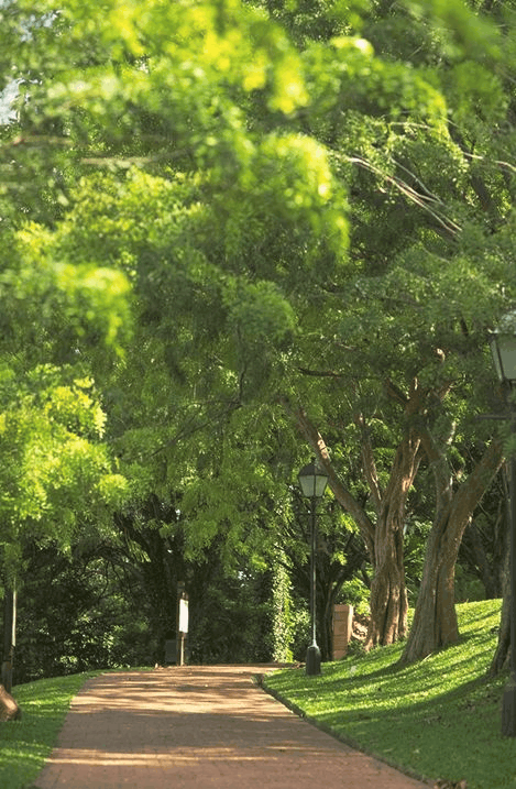 Fort Canning Park. Your essential guide to the best parks in Singapore
