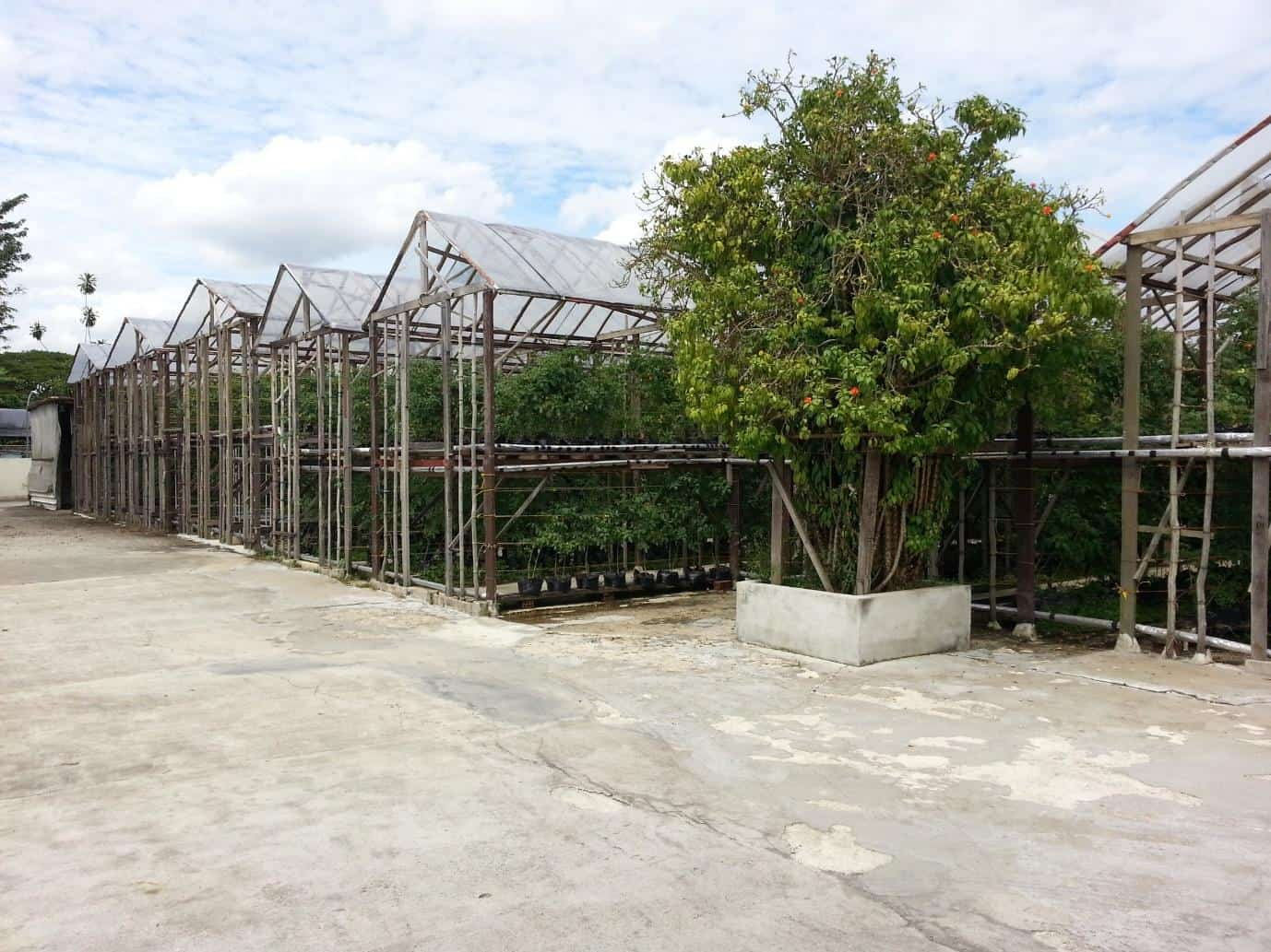 Pacific Agro Farm Food suburbs Singapore Urban farms in every neighbourhood, Is there a farm in Singapore? there are farms  in singapore especially at tengah and kranji area