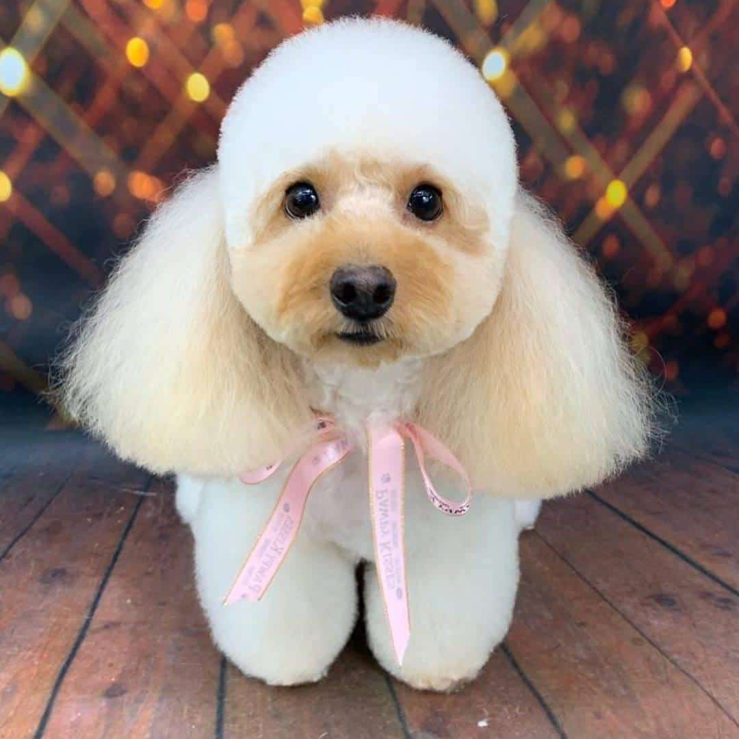 Pawpy Kisses 10 Dog Groomers In Singapore To Make Sure You Give Your pet Only The Best