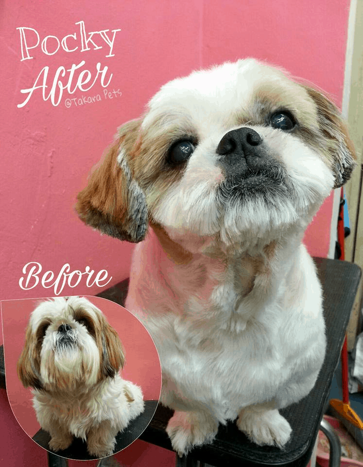 Takara Pets is one of the pet grooming salons in Singapore offer full grooming for your dogs