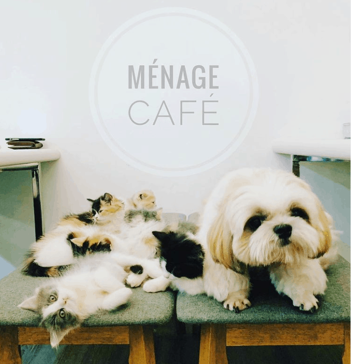 Menage Café is 10 Pet-Friendly Cafes In Singapore With Food For Both You and your pet