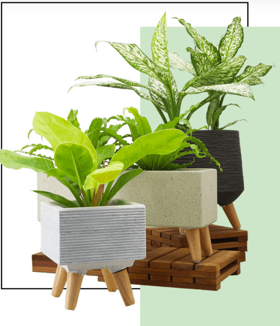Far East Flora Garden Centre is a popular place to buy plants in Singapore, Is Far East Flora open, far east flora market, far east flora wholesale, Is it cheaper to buy plants at a nursery?