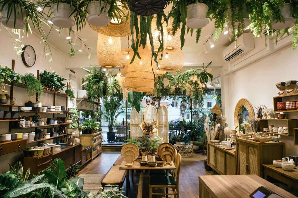 Potta Plantta is top 10 Plant Nurseries In Singapore For All Your Gardening materials, equipment, plant-loving community and help them bring nature into their living spaces