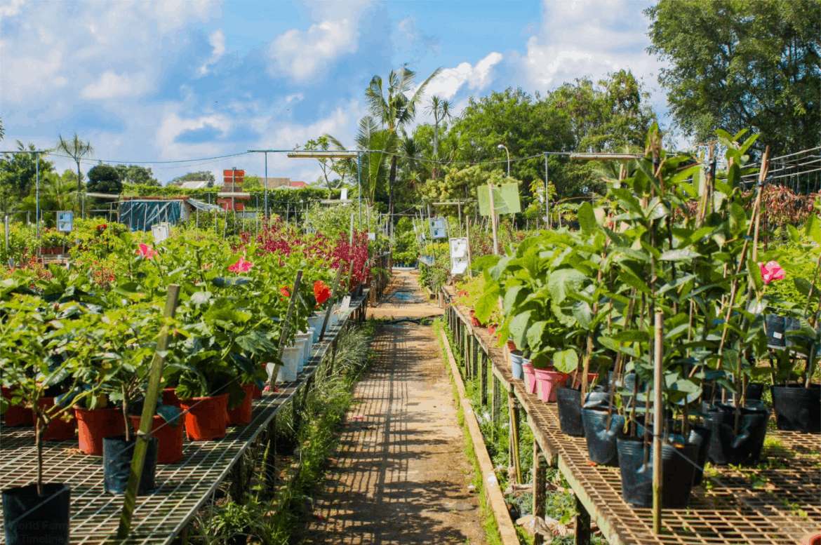 World Farm is top 10 plant nurseries and stores in Singapore, World Farm Singapore opening hours is from 8am–6pm