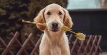 Best Pet Products to Buy for your Dog in Singapore 2021