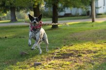 Top 10 Places for Dog Run in Singapore 2021