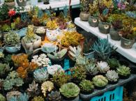 Plant Nurseries in Singapore 2021